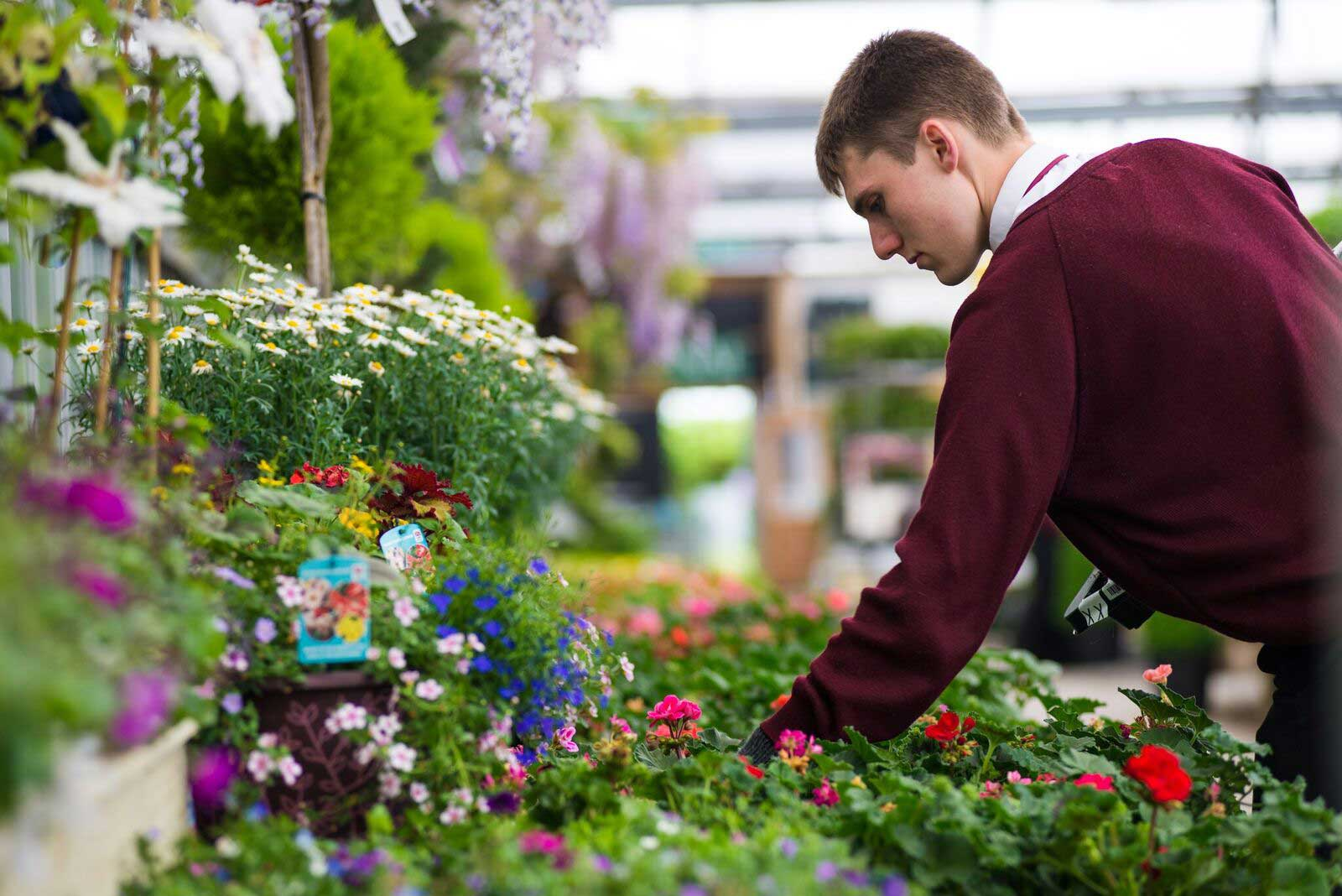 A young man in uniform inspects plants in a display