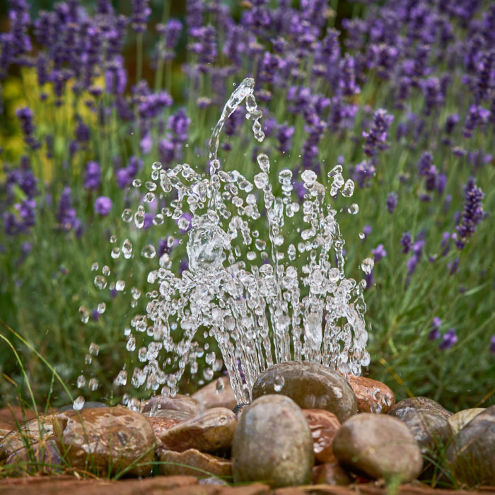 small founatain surrounded by pebbles and lavender planting