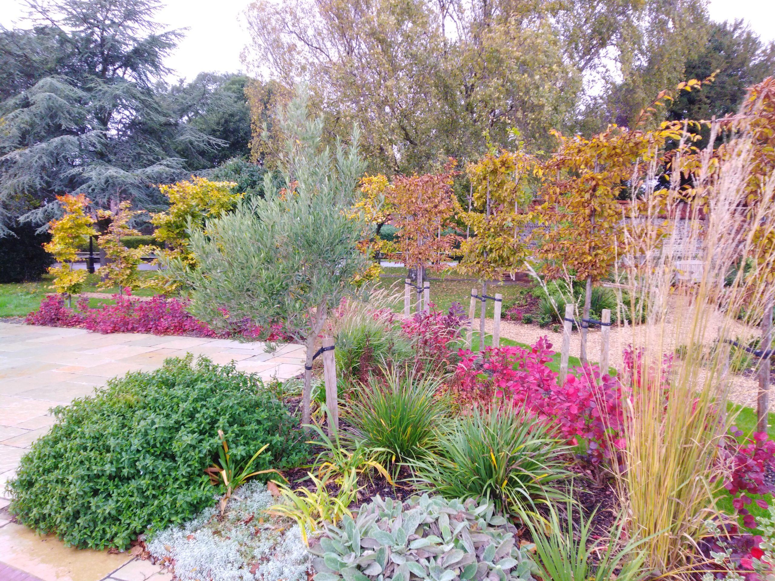 Vibrant Autumn Planting Colours