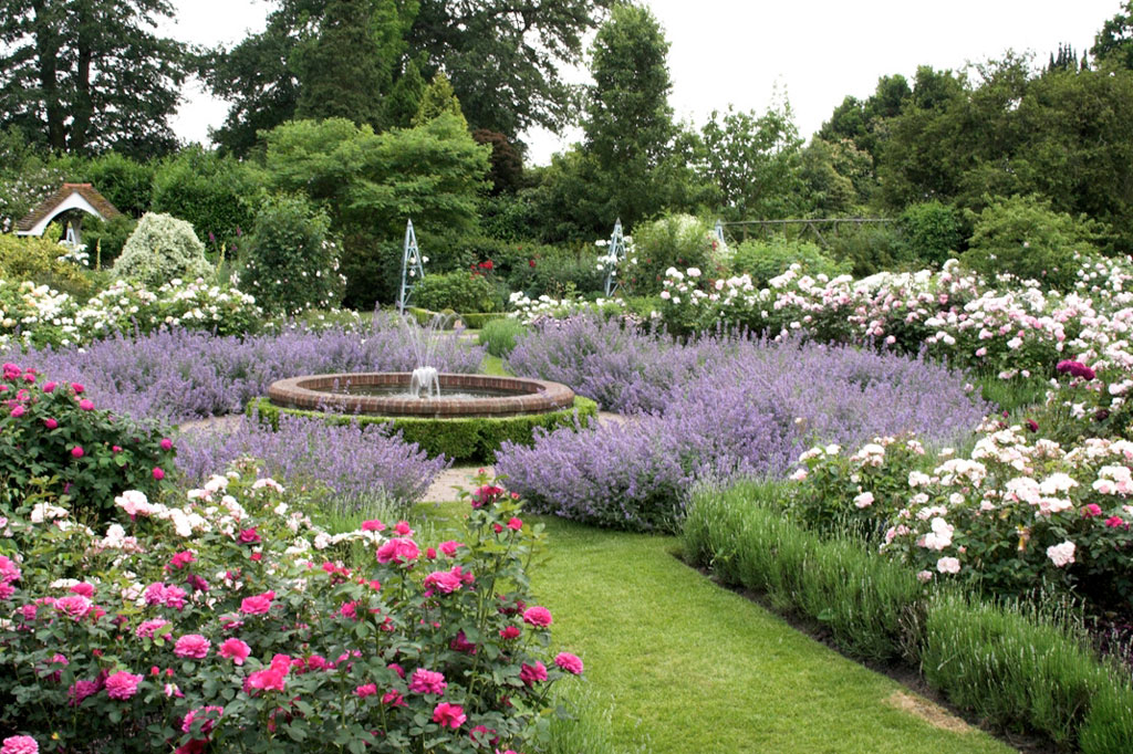Formal Rose garden with box hedging and overflowing lavender coloured flowers at the edges of the borders