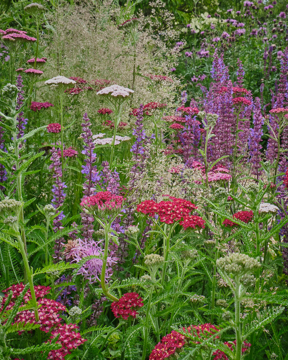 Blue, pruple and pink Summer Planting Scheme